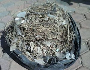 Rubbish from a bird nest